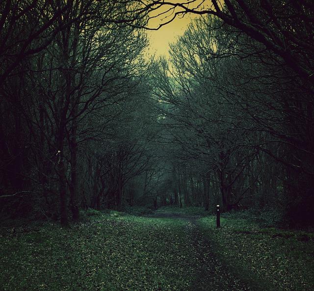 Spooky Path Nature · Free Photo On Pixabay