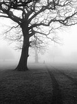 trees, mist, fog