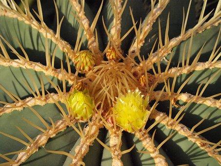 Kaktusblüte Bilder · Pixabay · Kostenlose Bilder herunterladen