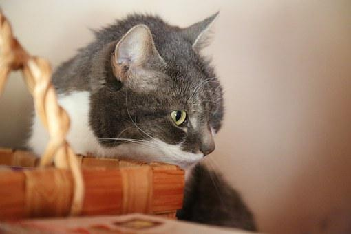 Cat, Basket, Look, Deep Thoughts, Oven