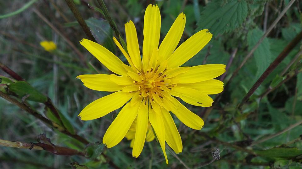 Wild Flower Yellow Flowers Free Photo On Pixabay