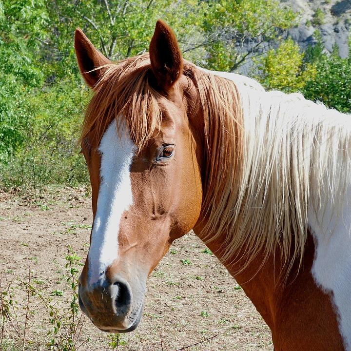paardenhoofd beelden - download gratis afbeeldingen - pixabay