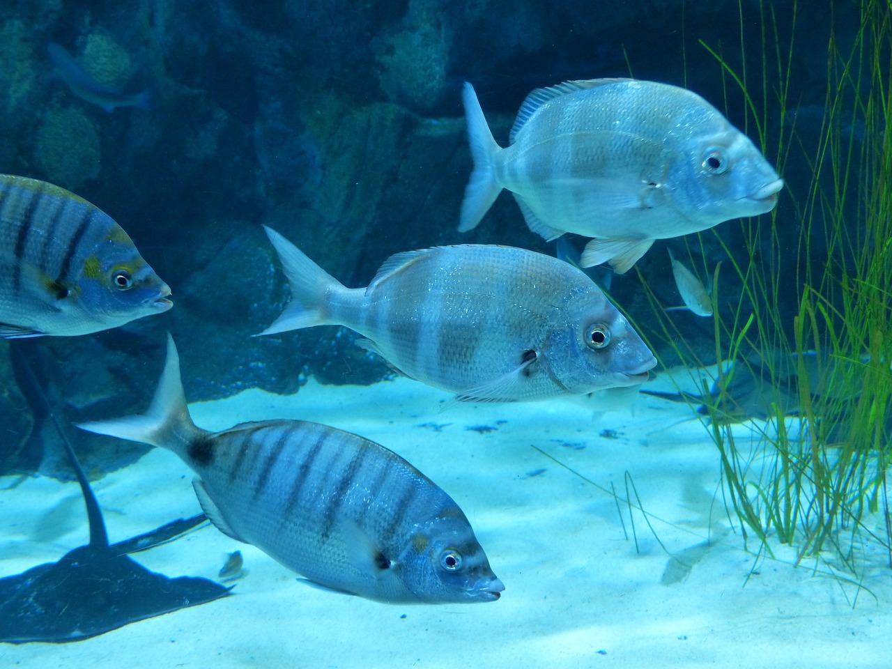 процесс картинка рыбы плавают в воде супругов