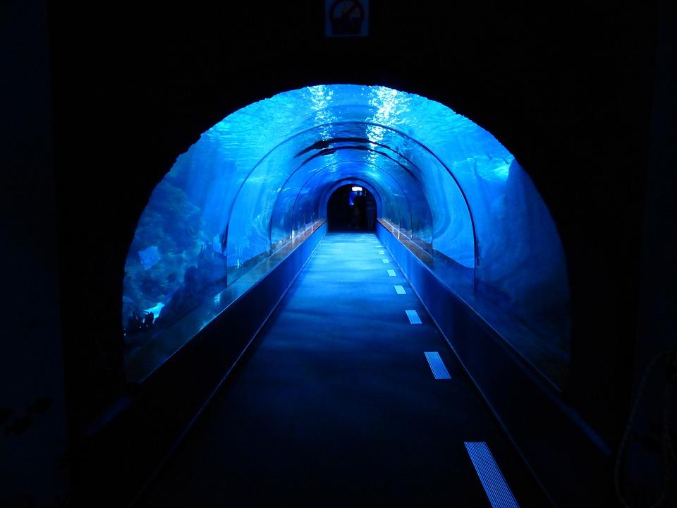 Túnel, Submarino, Acuario, Tanque De Tiburones, Azul