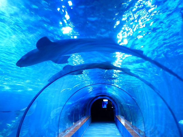 Kostenloses foto haifische fische haie aquarium for Fische aquarium