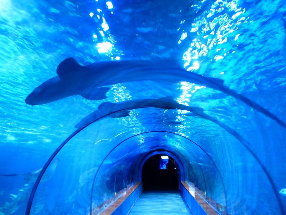 kostenloses foto haifische fische haie aquarium kostenloses bild auf pixabay 452909. Black Bedroom Furniture Sets. Home Design Ideas