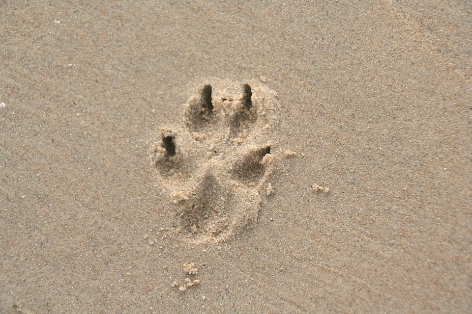 eb8b27268 Paw Print Sand Dog - Free photo on Pixabay