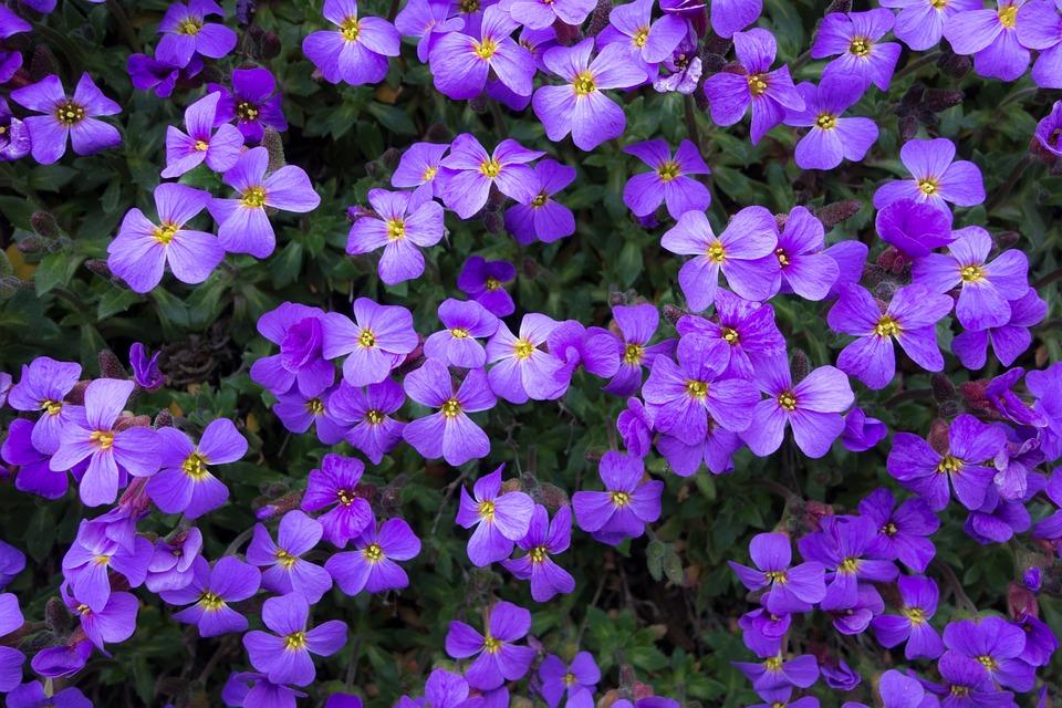 free photo flowers purple summer spring free image
