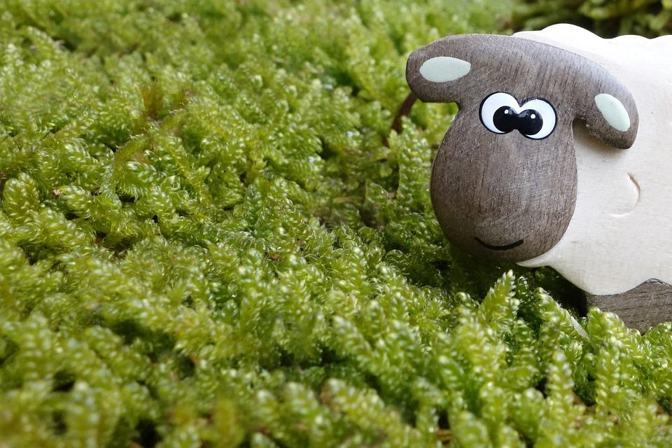 羊, 苔, 牧草地, 目, 木, 木のおもちゃ, おもちゃ, マクロ, かわいい