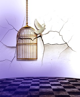 Käfig Bilder · Pixabay · Kostenlose Bilder herunterladen