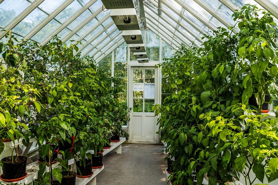 Free Photo Greenhouse Green Plants Growing Free