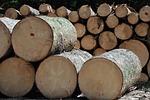 wood, tree, sawmill