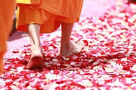 Monk, Walking, Rose Petals, Buddhism
