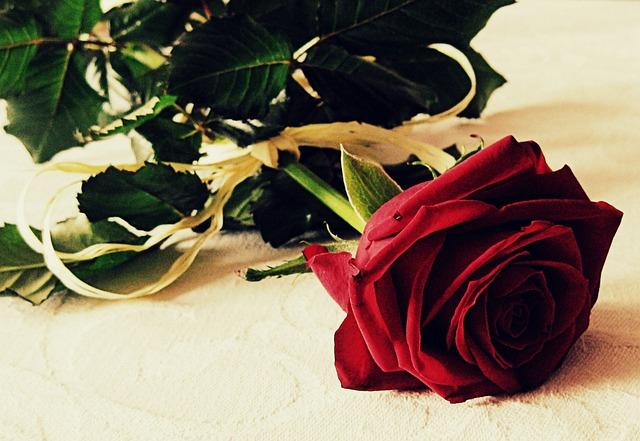 Photo gratuite rose l 39 amour romantique fleur image - Image d amour gratuite ...