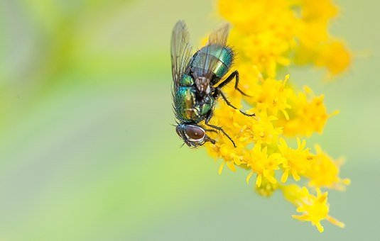 Fly, Macro, Nature, Insect, Animal