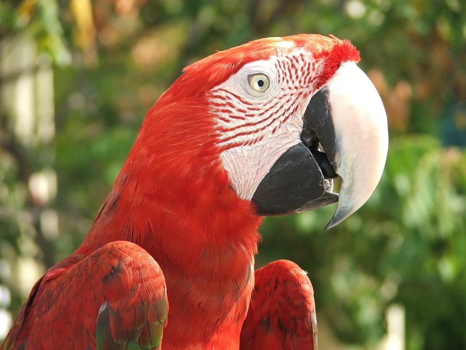 オウム 鳥 動物 · Pixabayの無料...