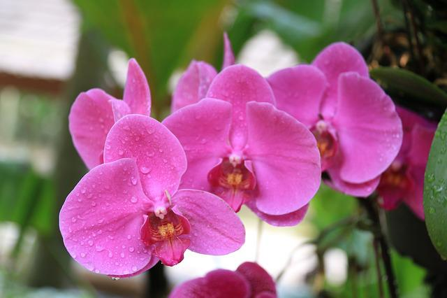 Orchids Flowers Pink · Free Photo On Pixabay