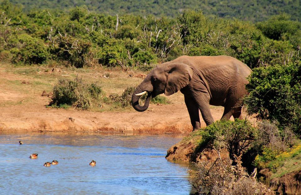 Addo Elephant National Park -Things to do in South Africa