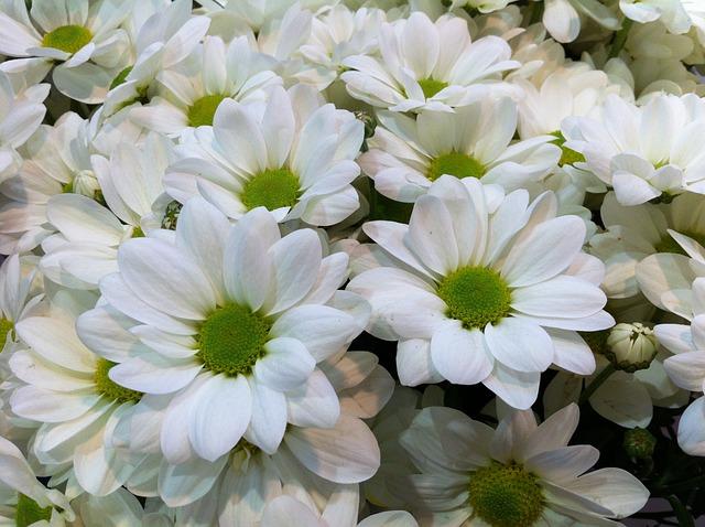 foto gratis flores natureza flores brancas imagem