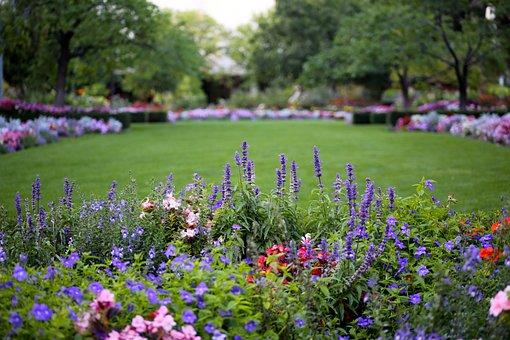Blumen, Park, Natur, Hübsch, Pflanze