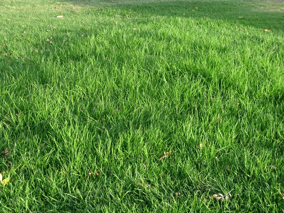 Free Photo Grass Green Texture Meadow Free Image On
