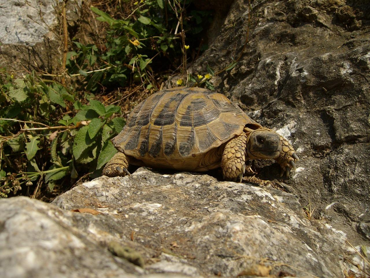 конкурса фото черепахи близко поздравления подруге жизни