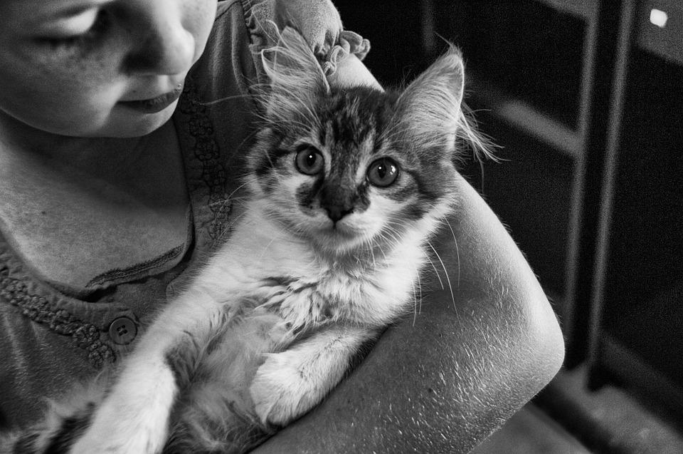 Menina, Gato, Jovem, Feminino, Animal