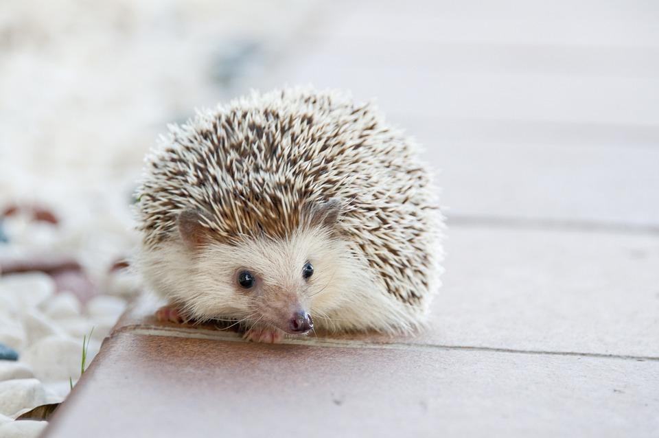 500 Kostenlose Igel Und Tier Bilder Pixabay