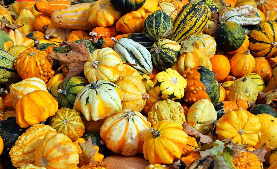 Kurbisse Herbst Oktober Kostenloses Foto Auf Pixabay