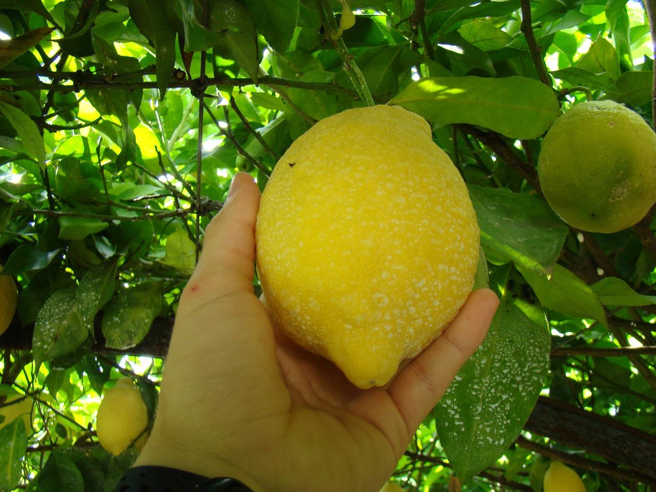 Картинка или фото лимона