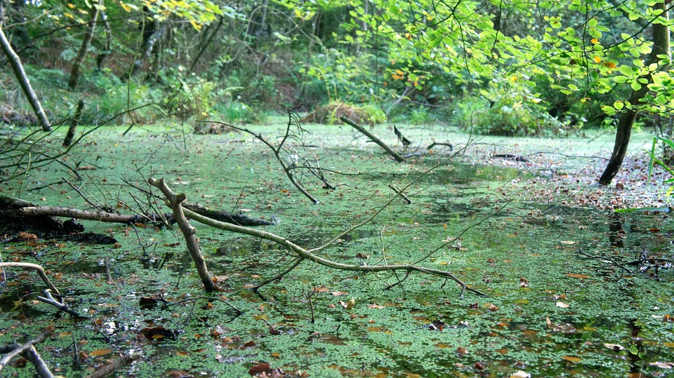 free photo swamp bog water pond green free image on