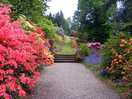 Сад, Цветы, Кусты, Пути, Дерево, Трава