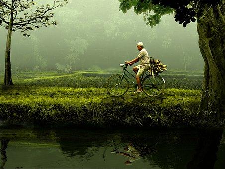 남자, 오래 된, 자전거, 자연, 그린