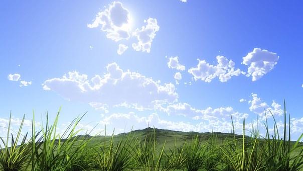 自然, 葉, 草, 青空, 雲, 大地, 太陽, 夏, 草原, 秋, 風景, 風
