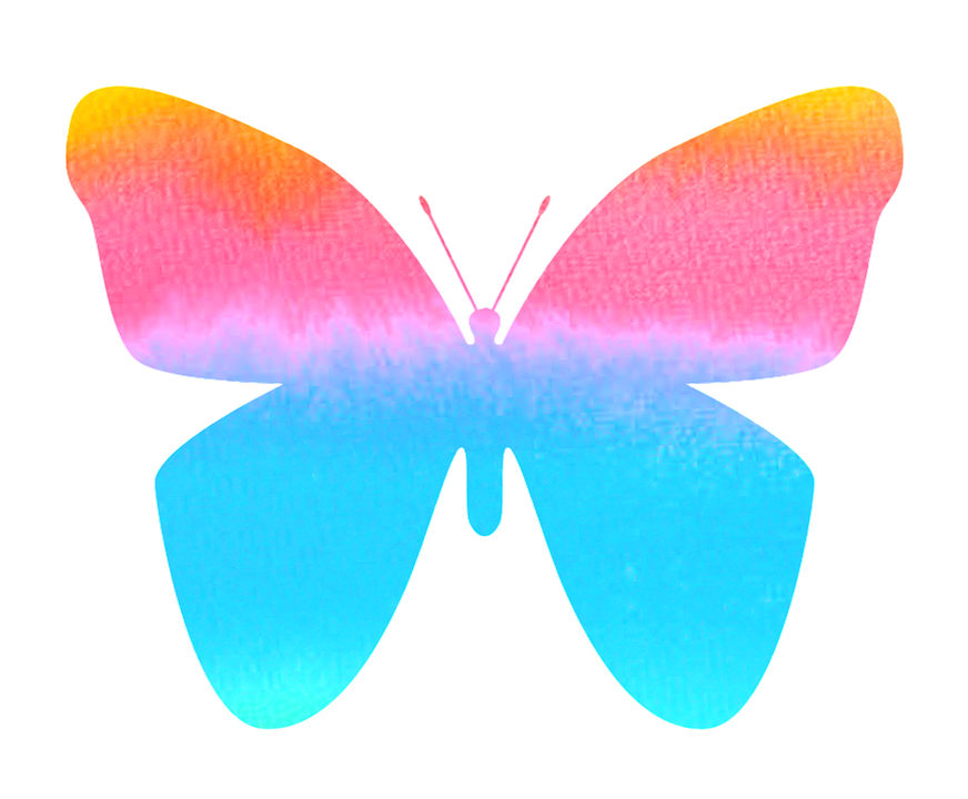 Free illustration: Butterfly, Color, Colorful, Nature