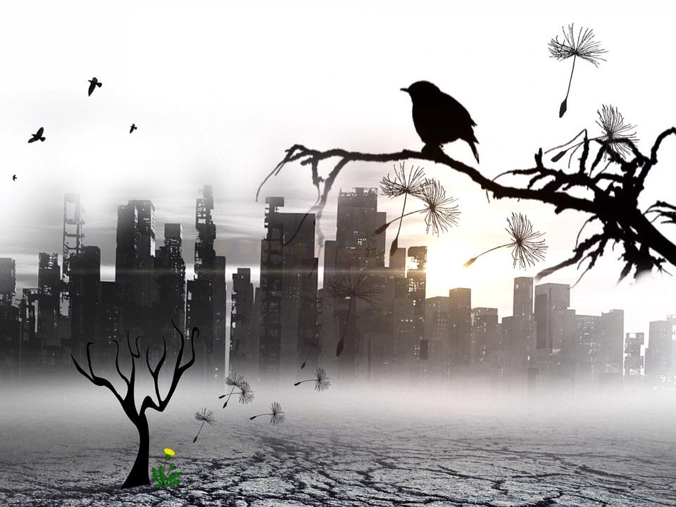 Bird, Ville, Carouge, Silhouette, Sun, Au Crépuscule