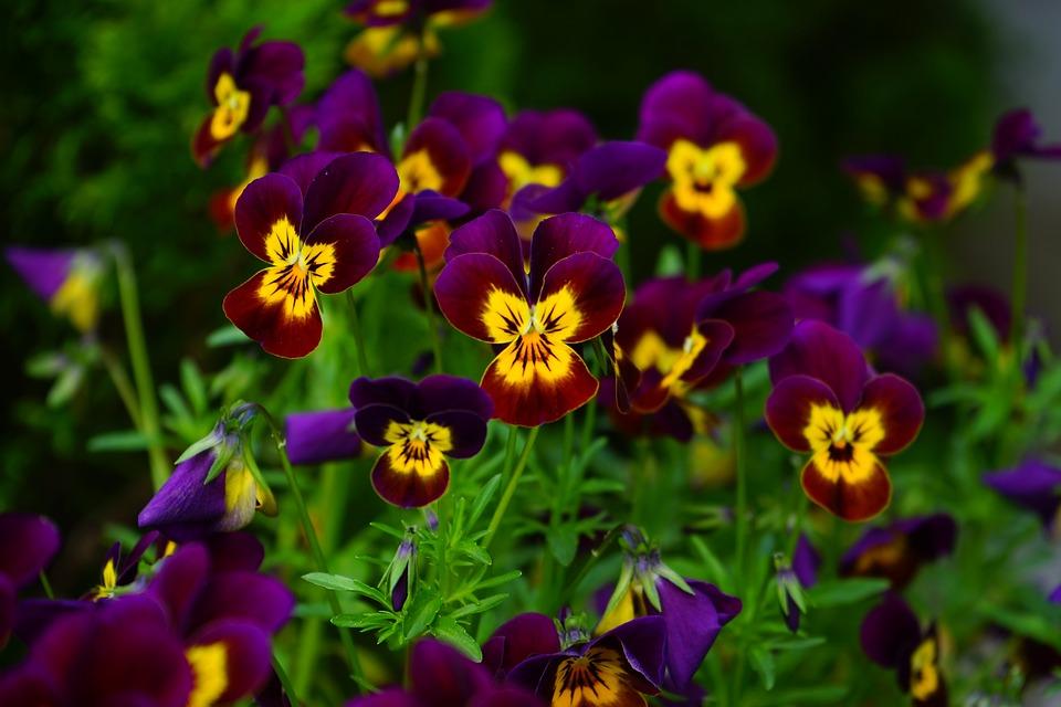 Фиолетово жёлтые цветы