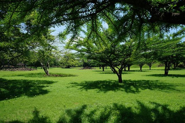 Foto gratis paisaje rboles grama pasto imagen for Tipos de cesped natural para jardin