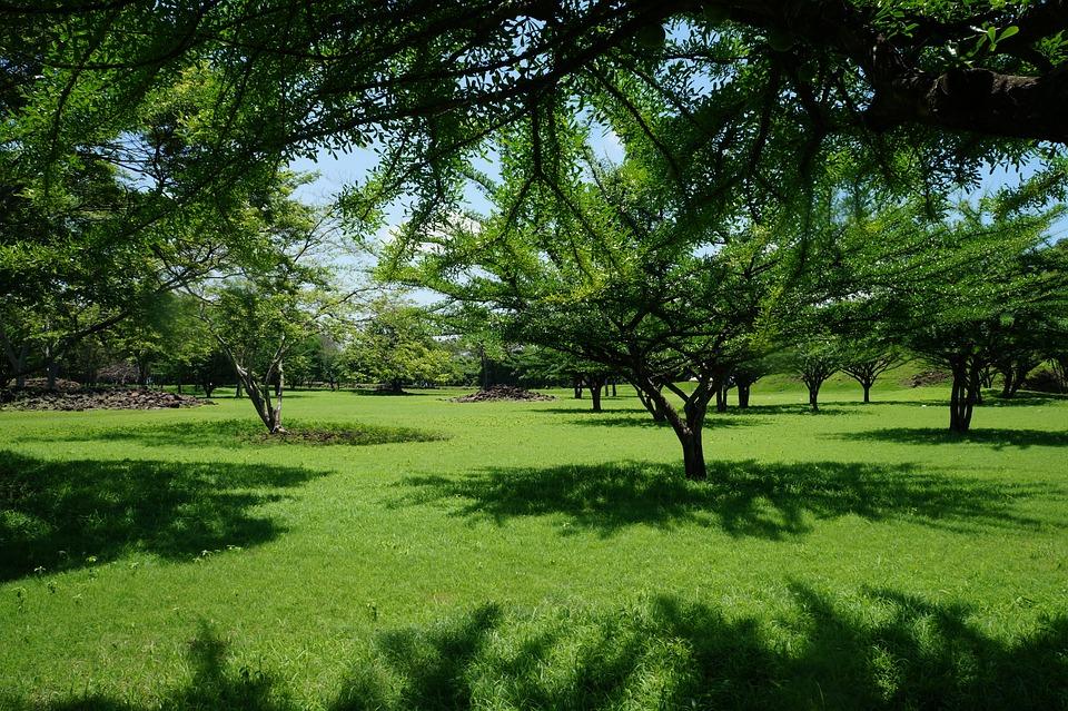 Foto gratis paisaje rboles grama pasto imagen for Arboles para sombra de poca raiz