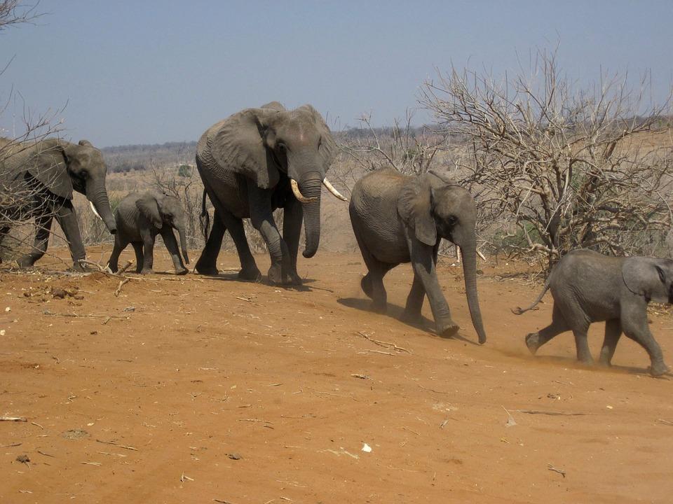 Les l phants famille groupe photo gratuite sur pixabay - Photos d elephants gratuites ...