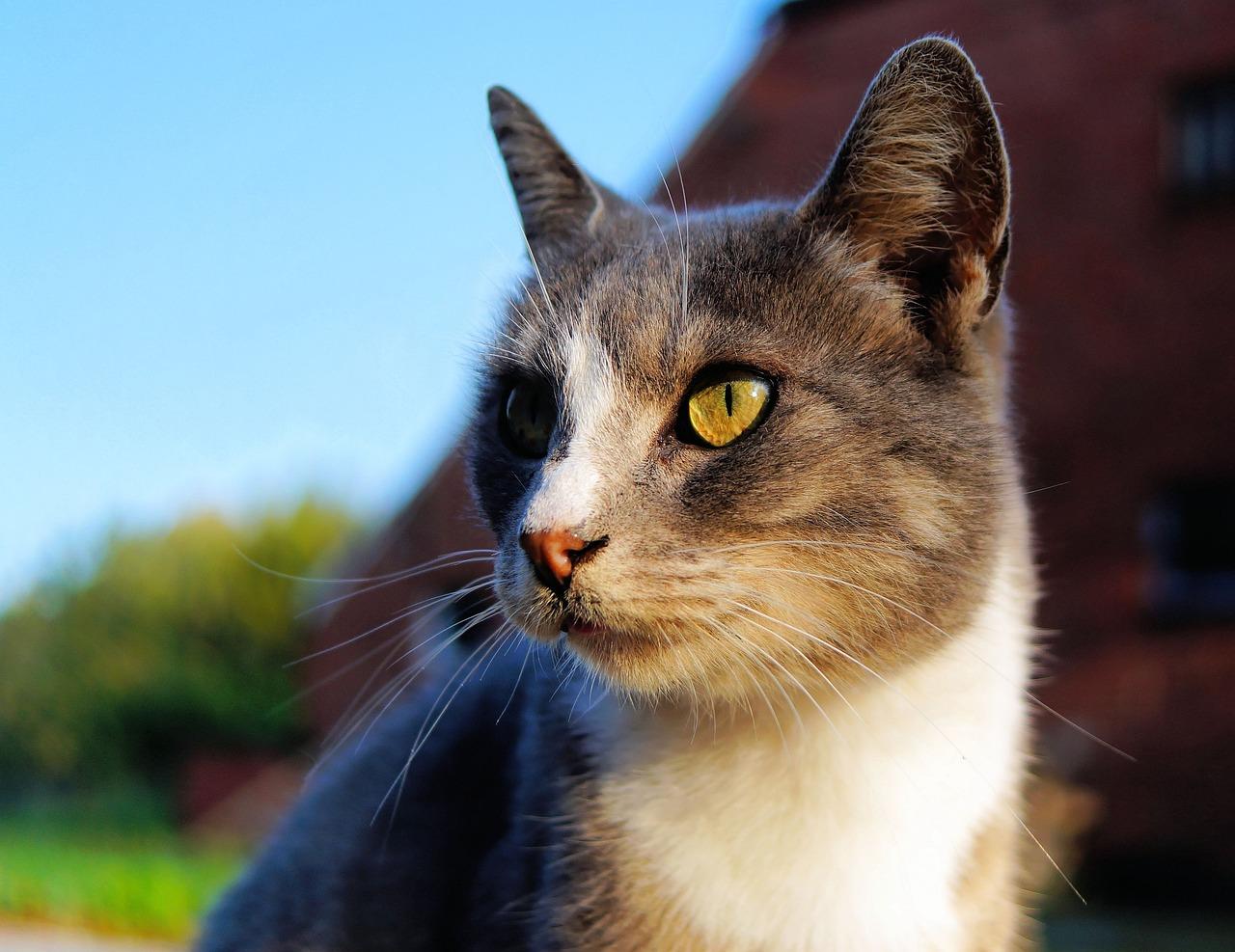 картинки голова кошек царапины можно легко
