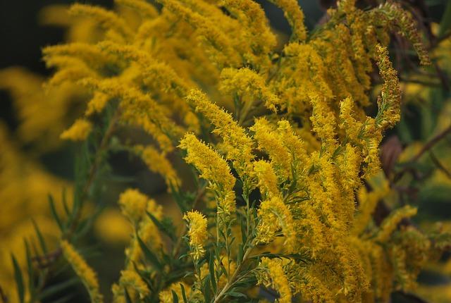 kostenloses foto wildblumen gelb unkraut natur kostenloses bild auf pixabay 477016. Black Bedroom Furniture Sets. Home Design Ideas