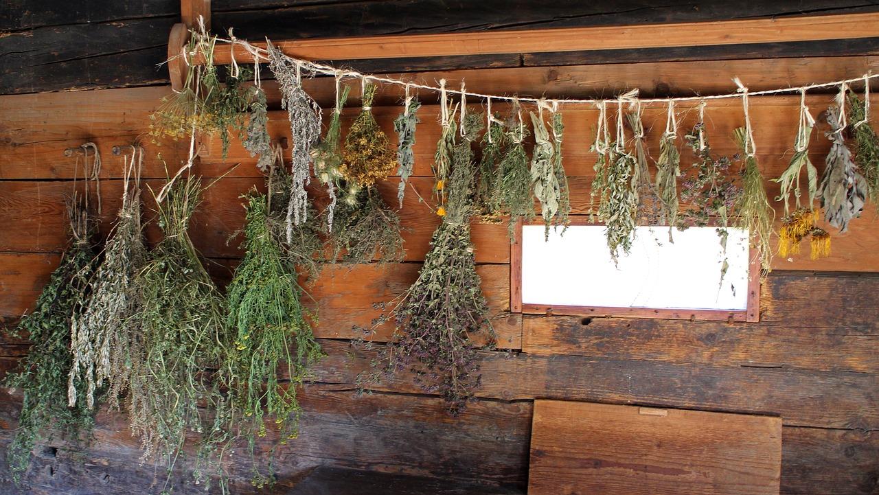 Сушить траву в домашних условиях