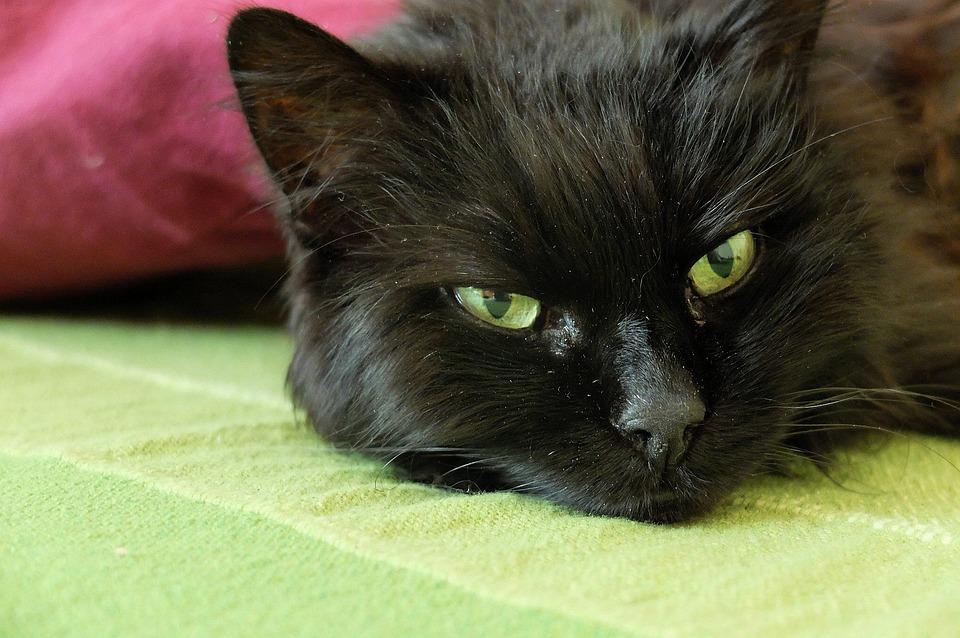 amatuer kočička trubky