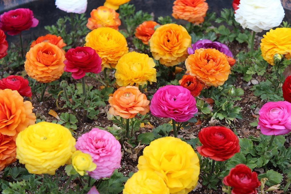Imagenes De Jardines Con Flores: Foto Gratis: Jardines De Flores, Flores, Tulip