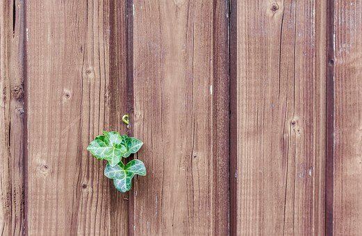 wood ivy wood fence paling boards