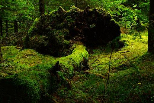Znalezione obrazy dla zapytania las