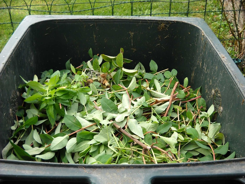 garden waste inside a best compost bin