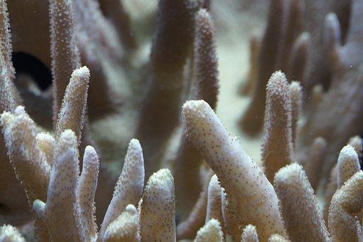 Coral Reef Close Up Underwater Coral