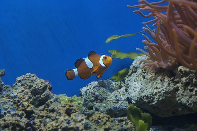 Free photo: Nemo, Aquarium, Clown Fish, Fish - Free Image on Pixabay ...